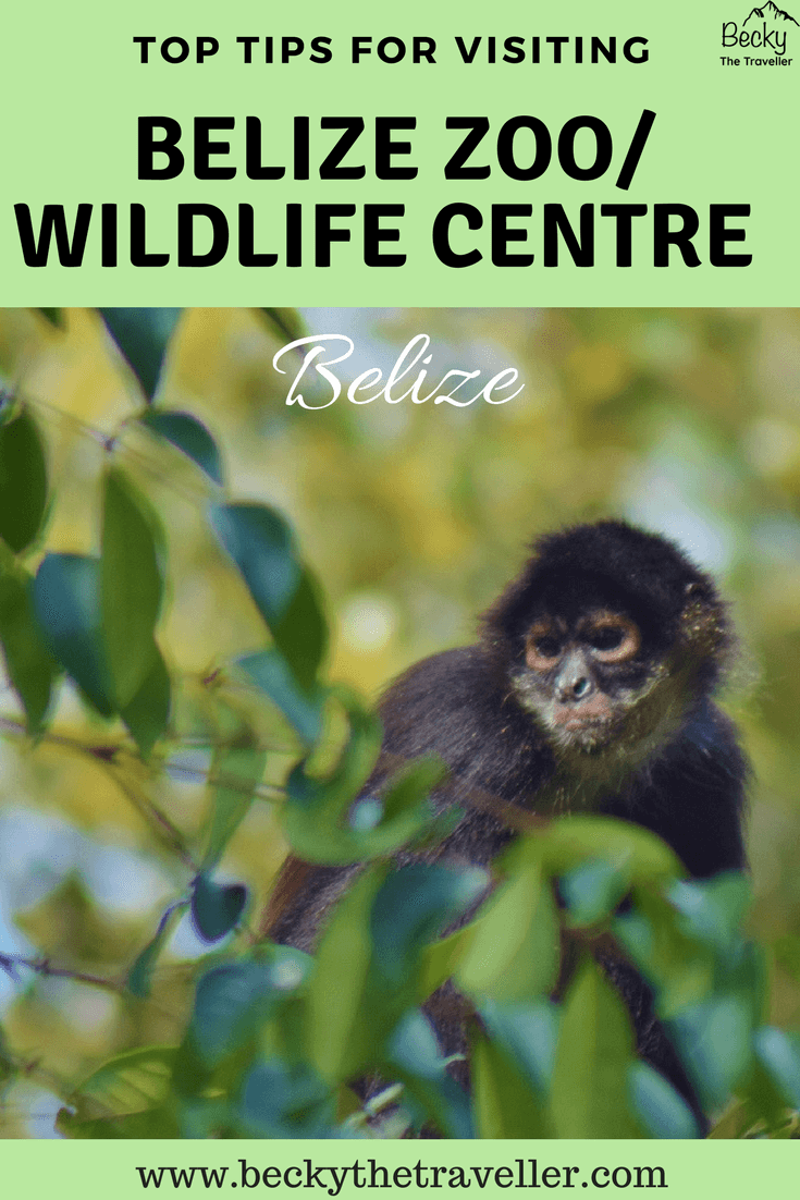 Belize Zoo including night tour