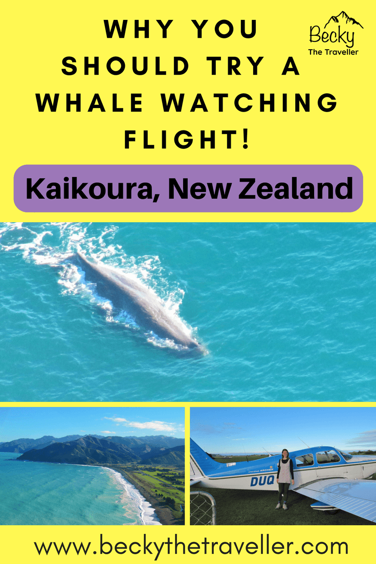 Sperm whale, Views of kaikoura and Plane - Whale watching flight in Kaikoura New Zealand