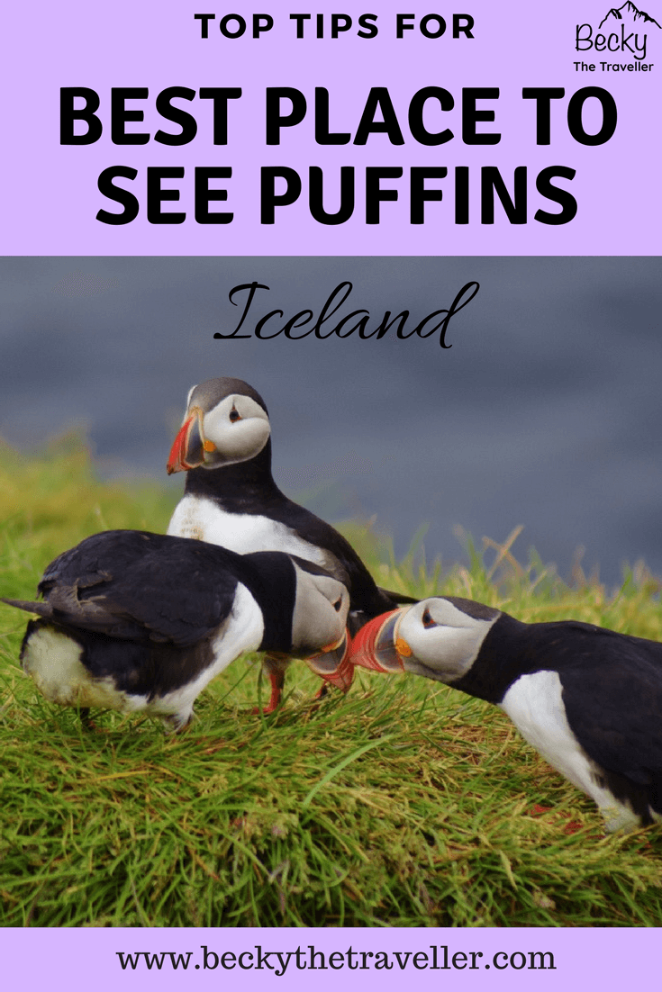 3 puffins together - Best place for seeing puffins in Iceland