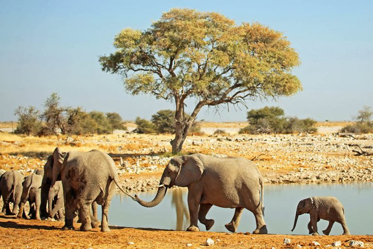 Wildlife experiences - Okaukuejo waterhole in Etosha National Park