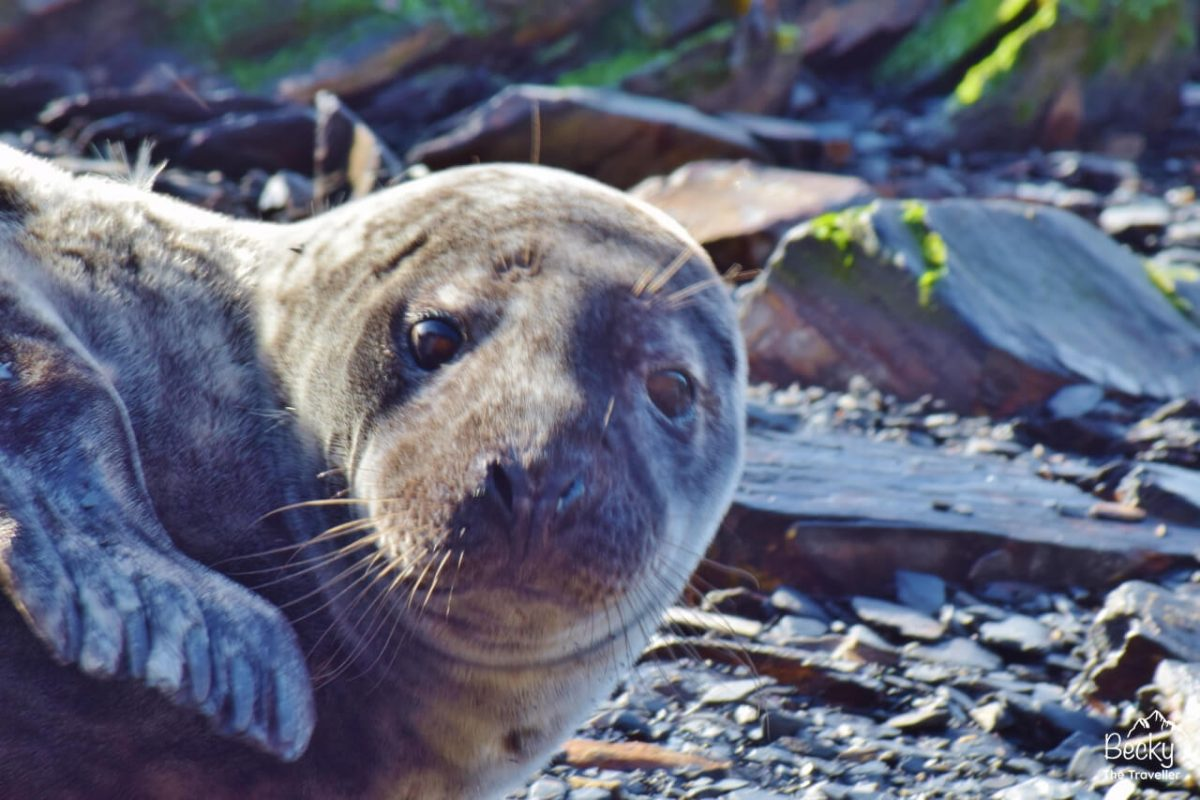 Seal spotting in the Pembrokeshire Coast National Park