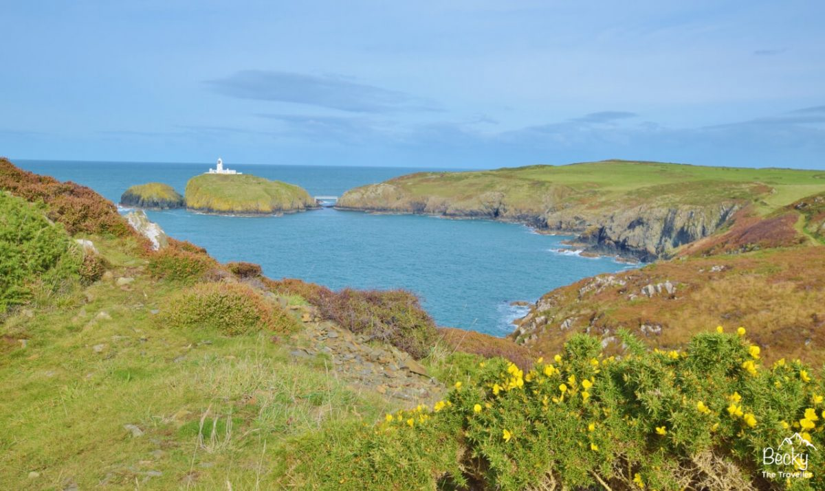 Things to do Pembrokeshire Coast National Park_Pwll Deri to Strumble Head walk