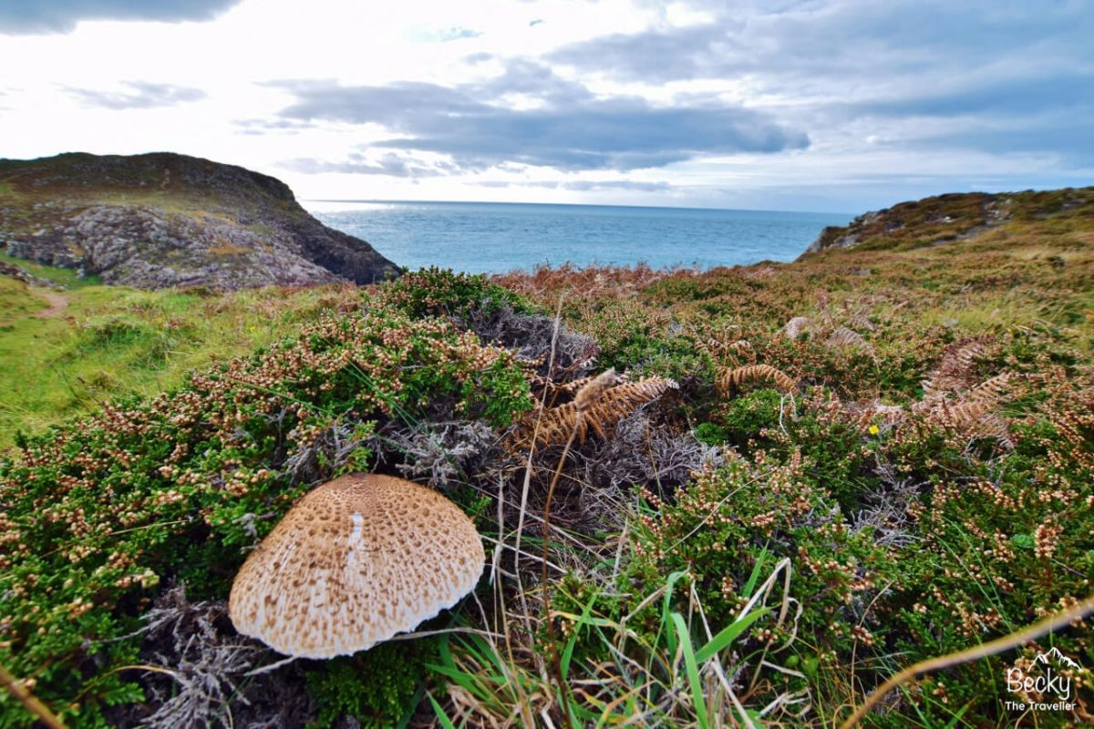 Autumnal day on the Pembrokeshire Coast