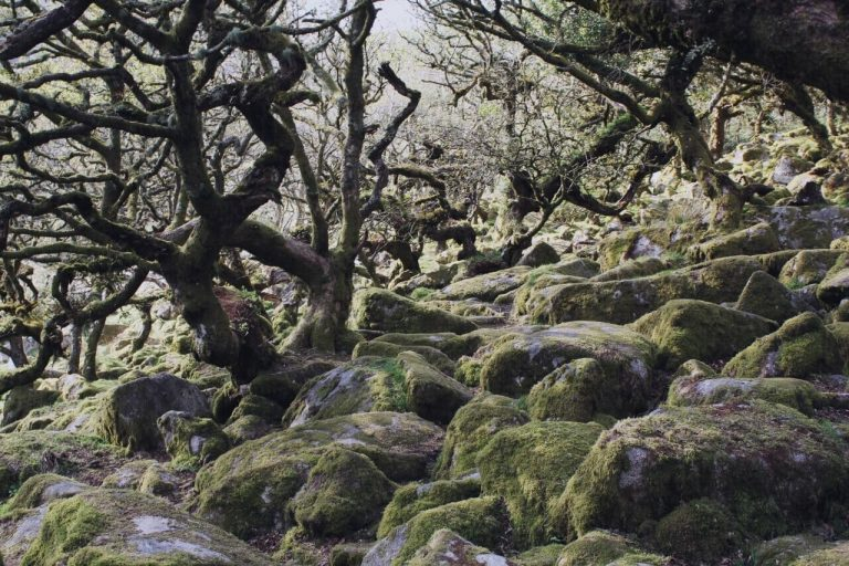 Hiking UK - a day hike at Wistmans Woods, Dartmoor, UK