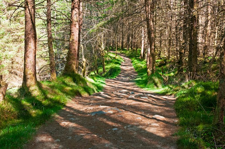 West Highland Way - forests on the hike
