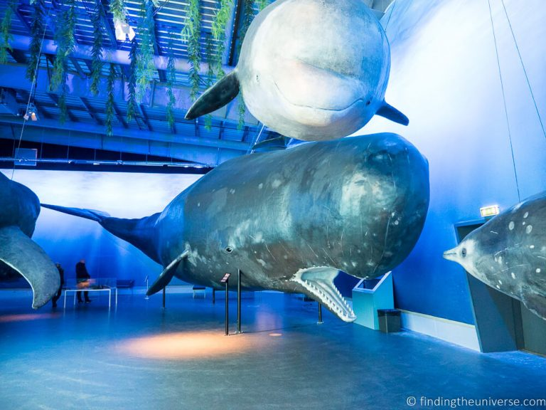 Inside the whale museum - whale models - Things to do in Reykjavik