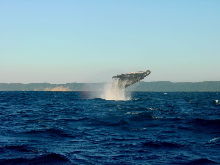 Whale jumping out of the water - Things to do in Reykjavik - Whale watching tours