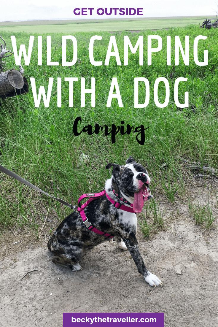 Wild camping dog