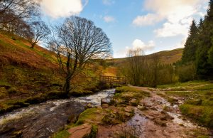 Waterfall Walk nr Talybont Forest