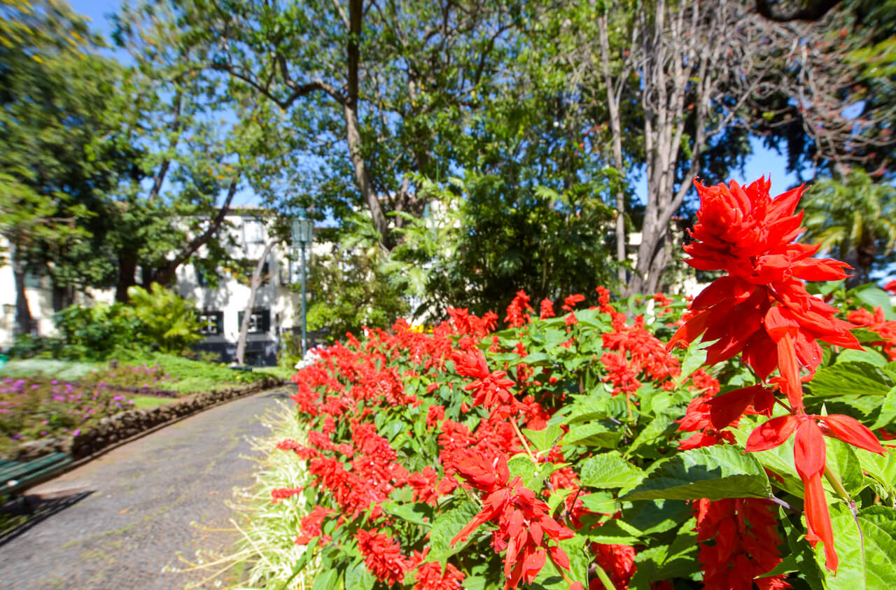 Flowers in Funchal City, Madeira