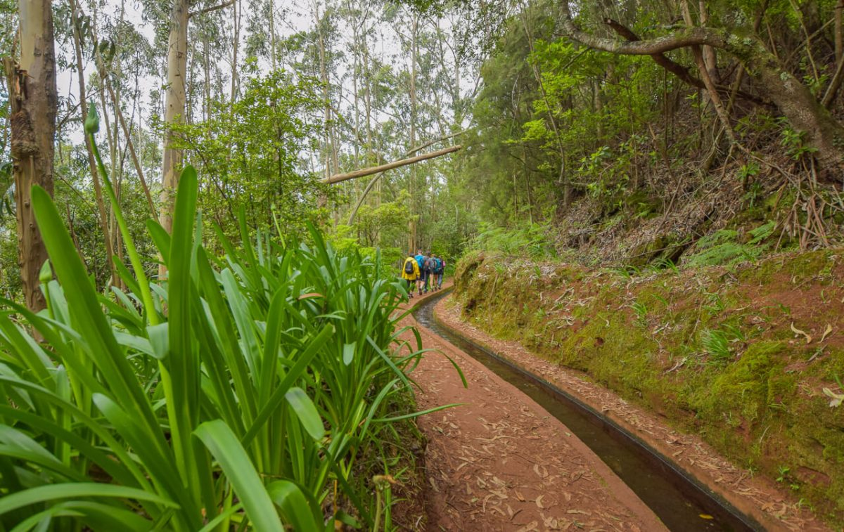 Levada walk, Madeira Walks