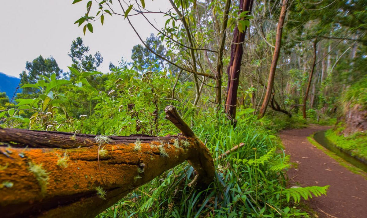 Nature on the Levada walk, Madeira