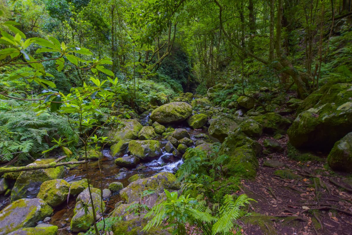 Exploring the Madeira by foot - Levada walk