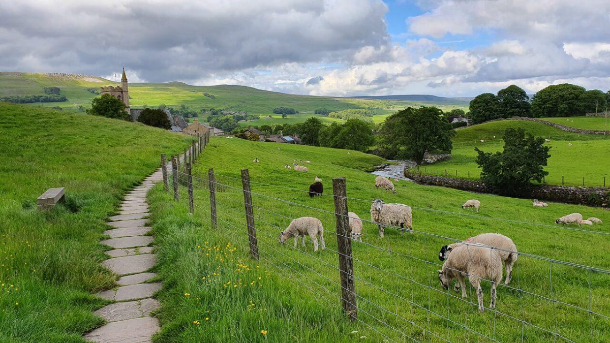 Sheep grazing near Hawes