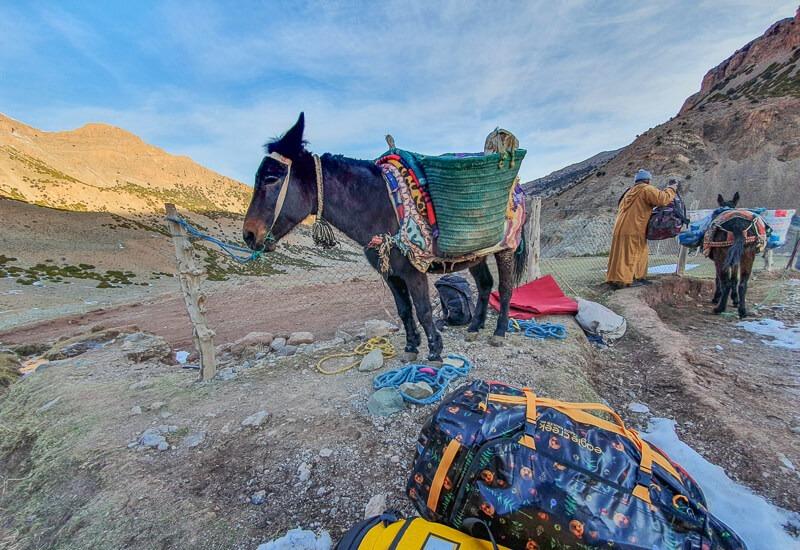 Mules with Eagle Creek Duffel Bag