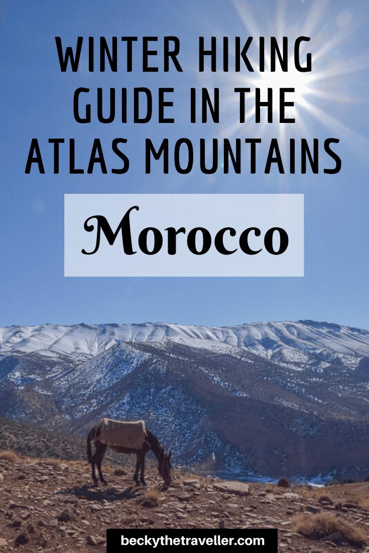 Mule in Atlas Mountains