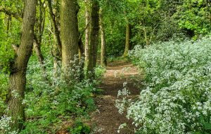 Bulwell Hall Park woods Nottingham