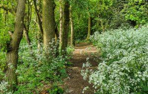 Bulwell Hall Park woods Nottingham