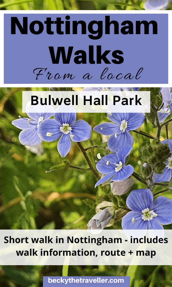 Nottingham walks - Forget-me-nots in Bulwell Hall Park
