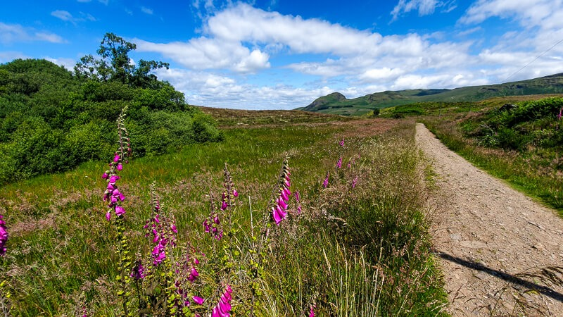 Flowers and path on West Highland Way