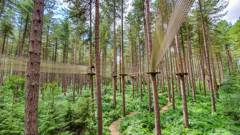 Pine trees in woods