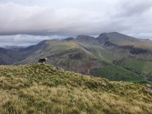 Herdy and hills behind